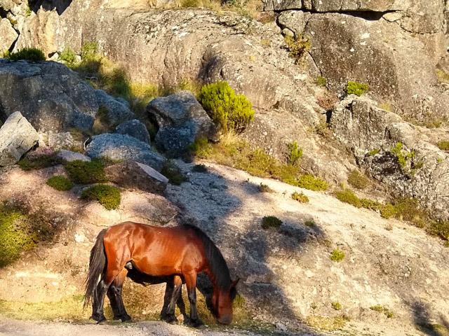 autovakantie portugal peneda geres park paarden wild