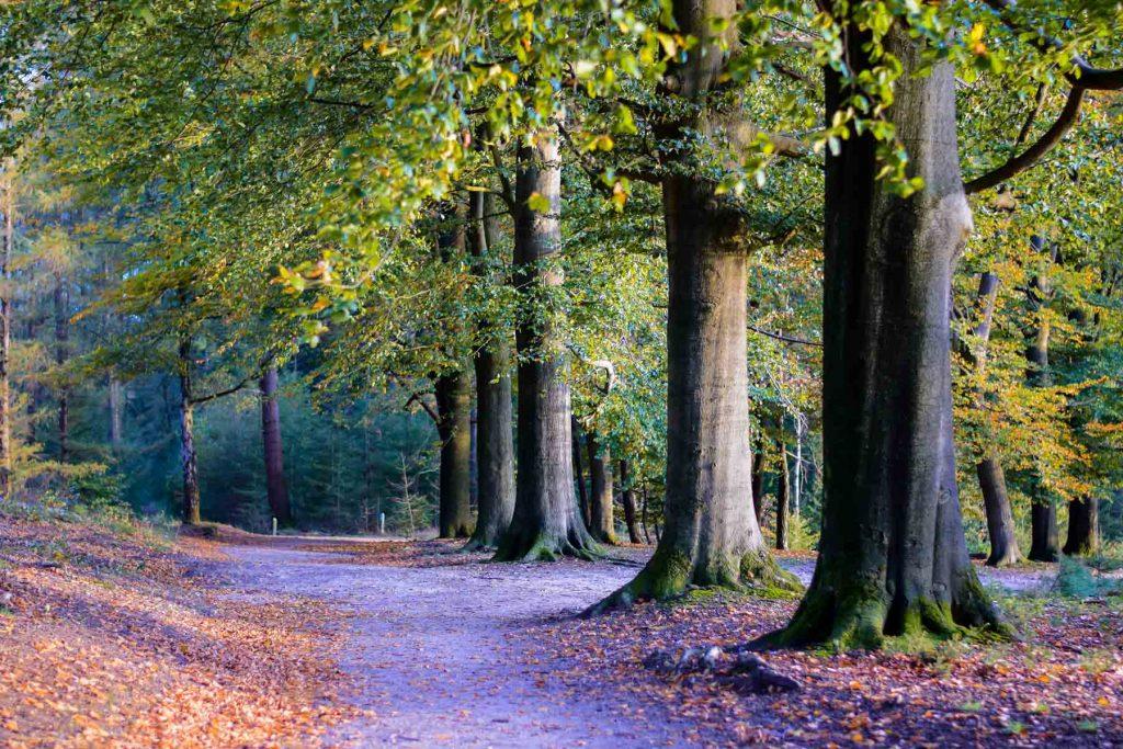 bomen oktober herfst