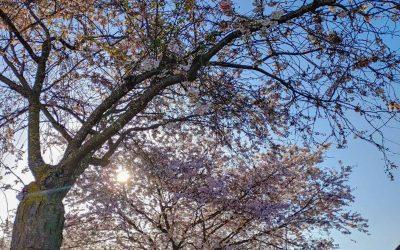 Altos e Baixos #8 | Mijn Ups en Downs van Maart