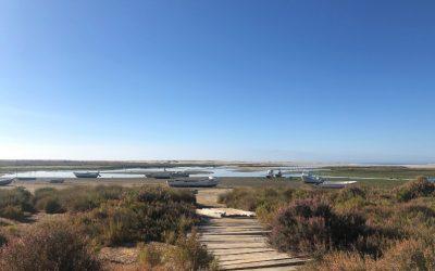 Ria Formosa: wandelen, hardlopen en fietsen in de natuur